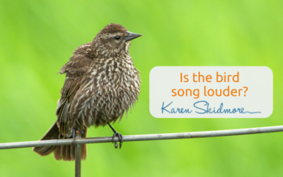 Is the bird song louder?